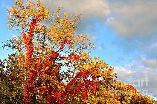 Autumn Splendor  by Jay Nodianos