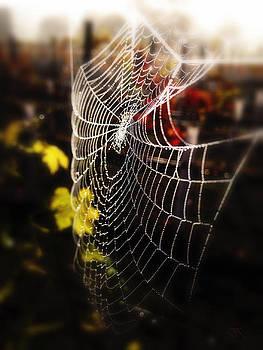 Autumn Web by John Monteath