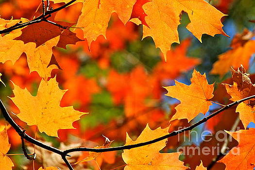 Autumn Wreath by Jay Nodianos