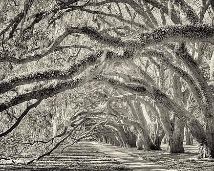 Avenue of Oaks by Bill LITTELL