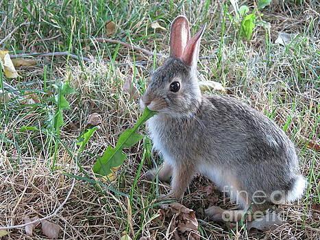 Baby Bunny Eating Dandelion #01 by Ausra Huntington nee Paulauskaite