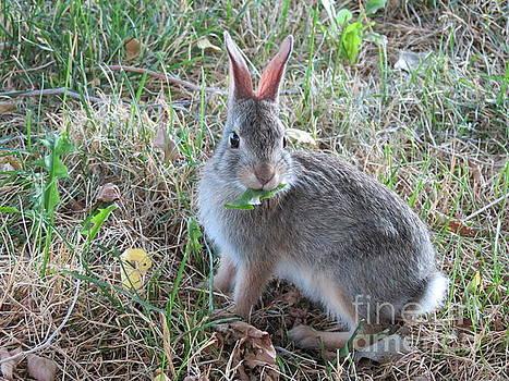Baby Bunny Eating Dandelion #02 by Ausra Huntington nee Paulauskaite