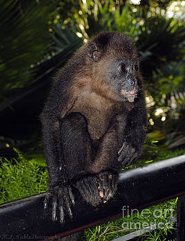 Baby Howler Monkey by Melissa Nickle