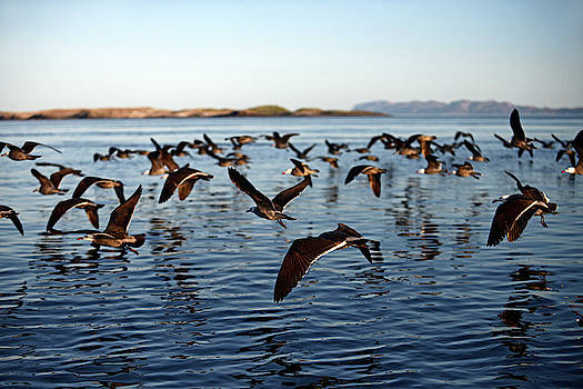 Baja California by Nano Calvo