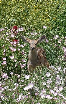 Bambi in the Garden Il by Jacquelyn Roberts