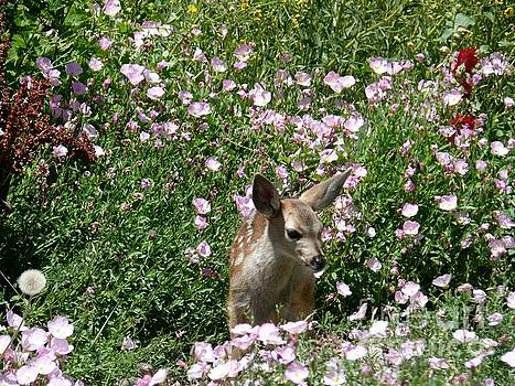 Bambi in the Summer Garden by Jacquelyn Roberts