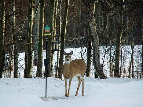 Bambi's Mom by Rose Szautner