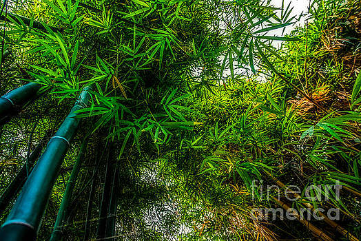 bamboo III - green by Hannes Cmarits