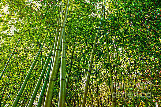 Bamboo by Nur Roy