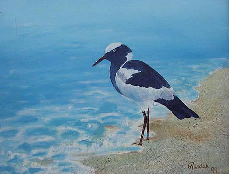 Beach Bird 2 by Randall Brewer