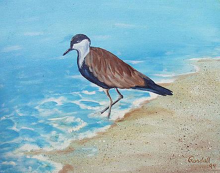 Beach Bird by Randall Brewer