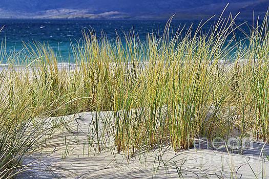 Beach Gras by Juergen Klust