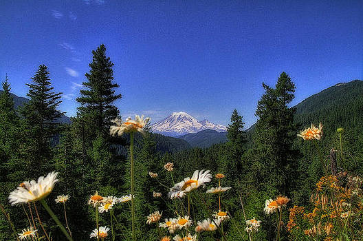 Beautiful Mt Rainier by Dan Quam