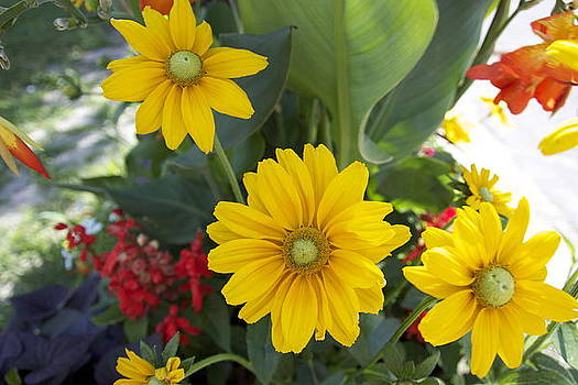 Beauty Flowers by Jocelyne Choquette