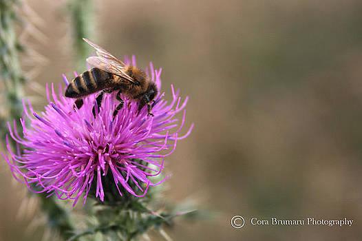 Bee by Cora Brum