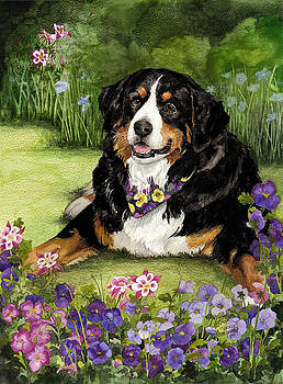 Bernese Mountain Dog by Terry Albert