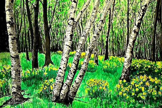 Birch Trees in Spring by Diane Merkle