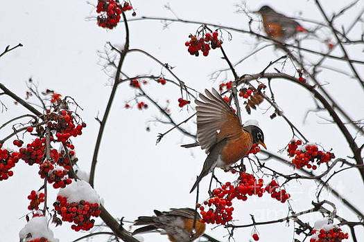 Bird and Berries by Jay Nodianos