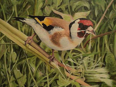 Bird by Drazenko Maric