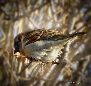 Bird  by Mikki Cucuzzo