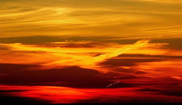 Bird of fire by Jocelyne Choquette