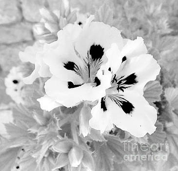 Black And White Flowers by Ioanna Papanikolaou