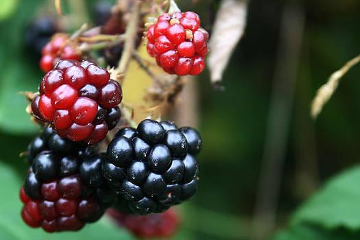 Black Berries by Cora Brum
