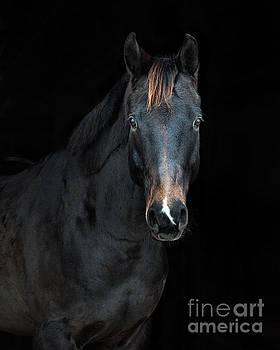 Black on Black by Heather Swan