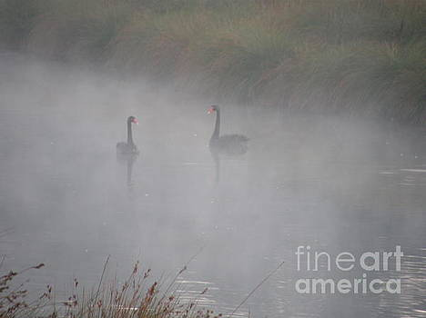 Black Swans in the Fog by Bev Conover