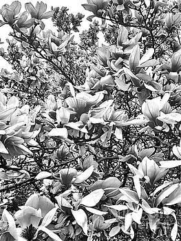Blossom Pattern 2 by Kimberly Nickoson