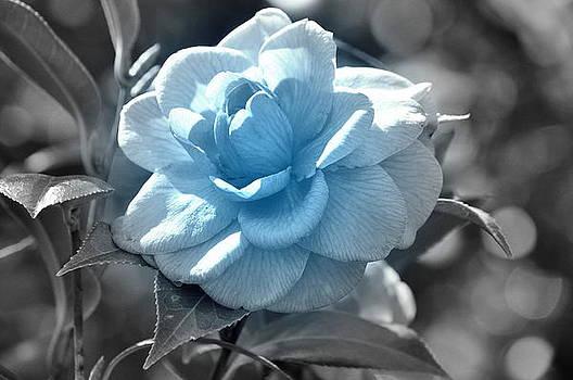 Blue Camellia by Dustin Bridges