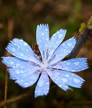 Blue flower by Cora Brum