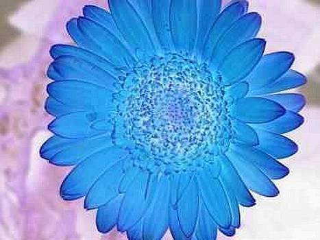Blue Surprise by Harry Wojahn