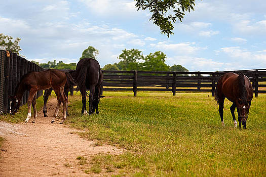 Bluegrass Horses by Gene Linzy