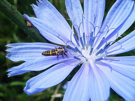 Bold Blue by Amanda Bobb