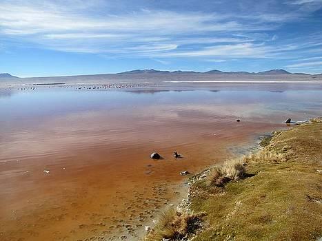 Bolivian lagoon by Elizabeth Hardie
