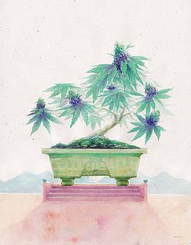 Bonsai Cannabis by Raymond L Warfield jr