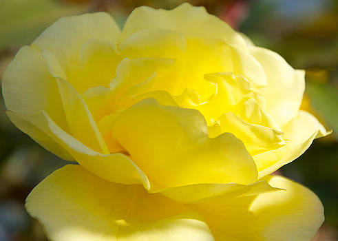 Brilliance in Yellow by wDm Gallery