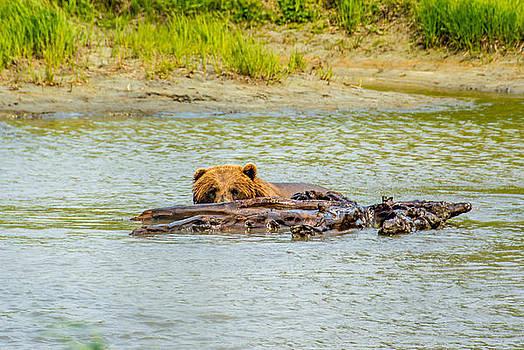 Brown Bear In Alaska by Shey Stitt