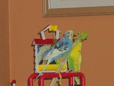 Budgies eating celery by Photo Shirts