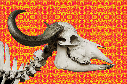Buffalo Skull On A Fractal by Ricardo  De Almeida