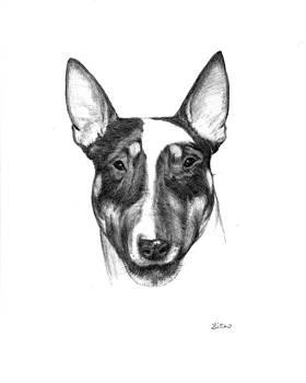 Bull Terrier by Lou Ortiz