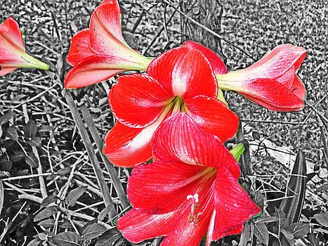 Burst of red by Regina McLeroy