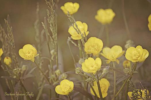 Buttercup Flowers by Darlene Bell