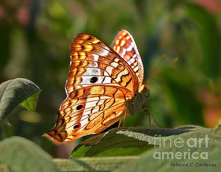 Butterfly Beauty by Rebecca Christine Cardenas