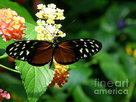 Butterfly by Bev Conover