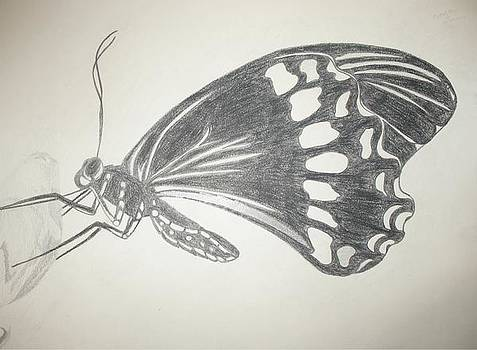 Butterfly by Catia Silva