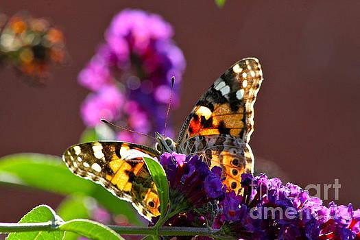 Butterfly Hiding by Jay Nodianos
