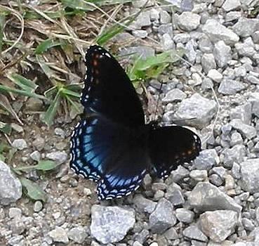 Butterfly by Jennifer Ransom
