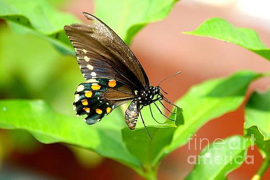 Butterfly nesting by Jay Nodianos